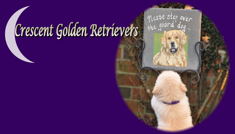 Golden Retriever Breeders Florida - Crescent Golden